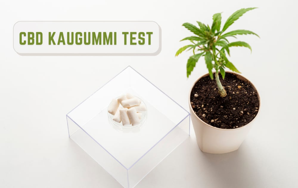 CBD kaugummi test